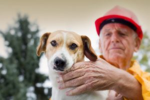 Preparing your pets for bushfire season